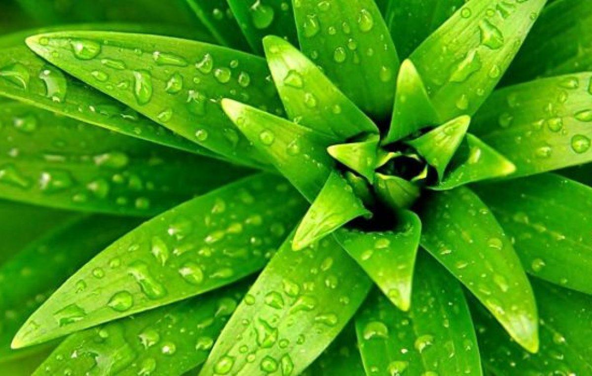 cient ficos revelan c mo las plantas pueden sentir y On plantas de guijarros masivos